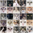 Group of cats — Stock Photo #39822135