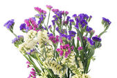 Limonium — Stock Photo