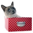Siamese Cat in box — Stock Photo #40616383