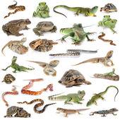 Reptile and amphibian — Stock Photo