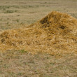Royalty-Free Stock Photo: Hay stack