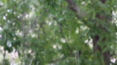 Дождь 3 — Стоковое видео