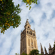Cathedral of Saint Mary of the See, Seville, Spain — Stock Photo