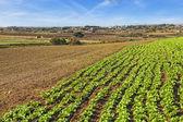 Malta Countryside — Stock Photo