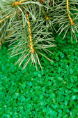 Aromatic green sea salt and fur-tree branch — Stockfoto