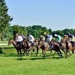 Постер, плакат: Horse race for the prize of the President of the City of Wroclaw on Juni 8 2014
