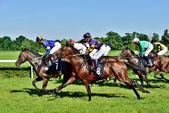 Koń wyścig o nagrodę prezydenta miasta Wrocławia na juni 8, 2014. — Zdjęcie stockowe