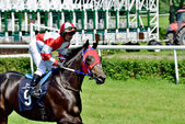 President's Day at the track Partenice, race for 3-year-old horses only group III in Wroclaw on Juni 8, 2014 — Stock Photo