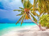 Tropical paradise. White sand palm beach and blue sky — Stock Photo