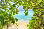 Tropical paradise. White sand beach and ocean through green leaves — Stock Photo