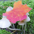 Picture of a wildlife forest mushroom in the woods — Stock Photo