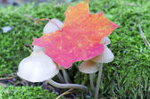 Photo d'un champignon de forêt de la faune dans les bois — Photo