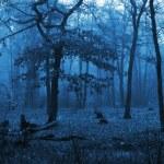 arbres dans une forêt avec brouillard et à l'automne les feuilles sur le terrain — Photo #40781001