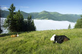 Beautiful landscape with green hills and a herd of cows  — Stock Photo