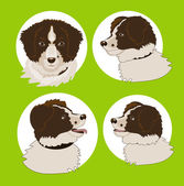 Four images of the dog — Stock Vector
