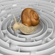 Snail and Maze — Stock Photo #31782523