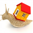 Snail with house — Stock Photo
