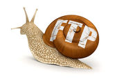 FTP Snail — Stock Photo