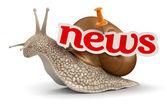 News Snail — Stock Photo