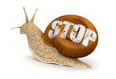 Garden snail and stop — Stock Photo