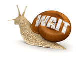 Wait snail — Stock Photo
