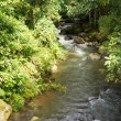 Small tropical river — Stock Photo