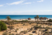 Coastal dunes — Stock Photo