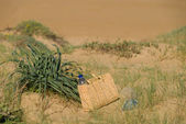 Sunny dunes — Stock Photo