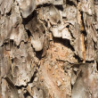 Tree rind — Stock Photo #22824920