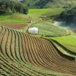 Agricultural terraces — Stockfoto