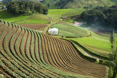 Agricultural terraces — Stock Photo