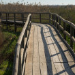 Stock Photo: Natural park footbridge