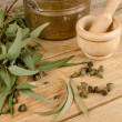 Stock Photo: Medicinal eucalyptus