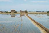 Campos de arroz — Foto de Stock