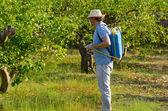 Опрыскивание поля лимона — Стоковое фото