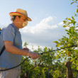 Stock Photo: Spraying citrus plantation