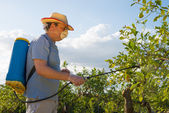 Spraying a citrus plantation — Stock Photo