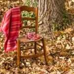 Fall scene — Stock Photo