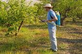 Spraying a lemon field — Stock Photo