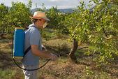 Spraying pesticide — Stock Photo