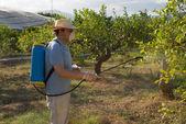 Spraying pesticide — Zdjęcie stockowe