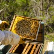 Apiarist at work — Stock Photo #30517777