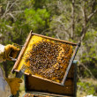 Apiarist at work — Stock Photo #30700231