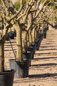 Raden av träd — Stockfoto