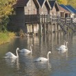 Swans on Lake Ammer - Foto Stock