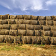 Stack of round bales of grass hay used for winter cattle feed. — Stock Photo