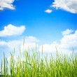 Green grass on summer day  — Stock Photo