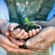 Young plant in hands — Stock Photo #28286771