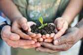 Hands holding a young plant — Stock Photo
