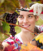 Young woman cutting a bunch of grapes — Stock Photo